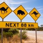 Famous Australian Sign Camels Wombats Kangaroos