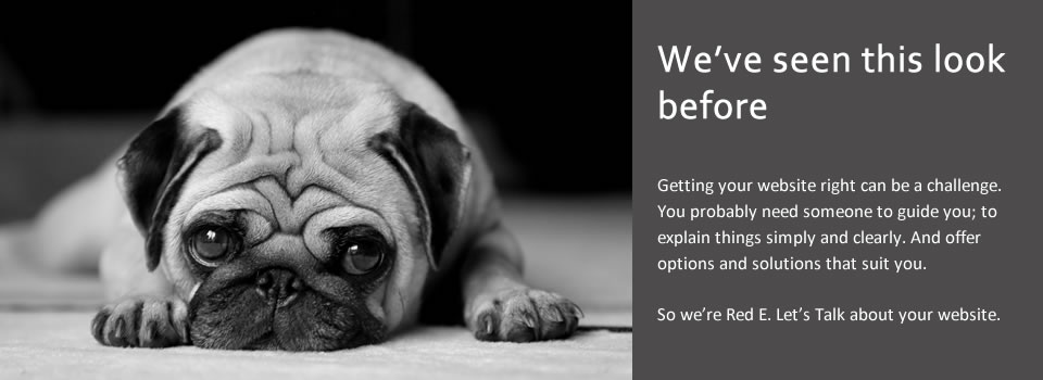 A miserable looking pug dog illustrating the challenges of web design and content management.